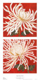 Spider Mum Petites Prints by Judy Shelby