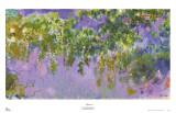 Glicine Poster di Claude Monet
