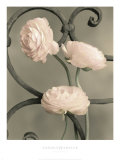 Iron Trellis I Prints by Sondra Wampler