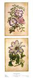 Flowering Clematis Poster von Louis Van Houtte