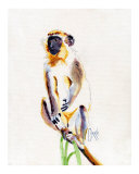Barbados Green Monkey Giclee Print by Corrie Scott