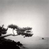 Two Branched Pine, Nakano Umi, Japan Poster von Rolfe Horn