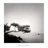 Two Branched Pine, Nakano Umi, Japan Posters by Rolfe Horn