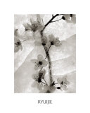 Cherry Blossoms in Winter Poster by  Ryuijie