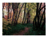 Wooded Path at Oak Creek Canyon Photographic Print by Jeffrey Wymore
