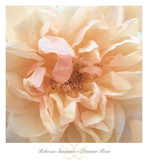 Promise Rose Prints by Rebecca Swanson