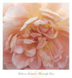 Heavenly Rose Poster by Rebecca Swanson