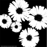 Black and White Asters II Affiche par Patti Socci