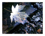 Leaf In Pond Photographic Print by Debby WESTCOTT