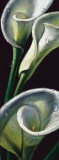 Dewdrop Callas Posters by Alma&#39;ch 