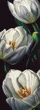 Dewdrop Tulips Prints by  Alma'ch