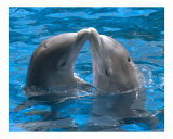 Dolphin kiss Photographic Print by  Himani