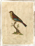 Selby Birds IV Premium Giclee Print by Prideaux John Selby