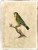Selby Birds II Premium Giclee Print by Prideaux John Selby