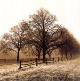 Row of Trees Art par Harold Silverman