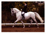 Dressage Giclee Print by Sara Stafford
