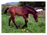 Horse Giclee Print by Sara Stafford