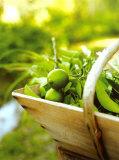 Verde lima Pósters por James Carrier
