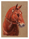 Greencoat Giclee Print by Lorrie Beck