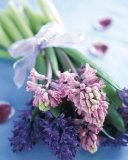 Hyacinths Print by Pernilla Bergdahl