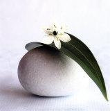 Fleur sur galet Affiches par Amelie Vuillon