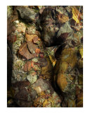 Homage to Rodin&#39;s Eternelle Idole - Variation Sea Bottom 3 Giclee Print by Ina Mar