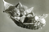 Katten in een hangmat Poster van Keith Kimberlin