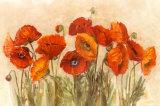 Amapolas vibrantes|Vibrant Poppies Póster por Carol Rowan