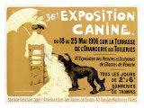36. Ausstellung von Briard-Hunden Giclée-Druck von Edouard Doigneau