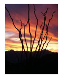 Ocotillo Sunset Photographic Print by Harley Lever