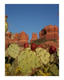 Sedona Harvest Photographic Print by Harley Lever