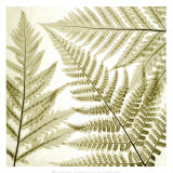 Ferns III Prints by Steven N. Meyers