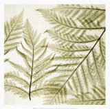 Ferns I Prints by Steven N. Meyers