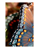 Butterfly Photographic Print by Lauren Taglialatela