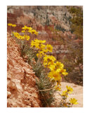 Bryce  Bouquet Photographic Print by Harley Lever