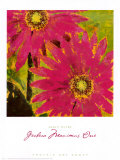Gerbera Maximus I Art by Karen Dupré