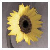 Sunflower Posters af Erin Clark