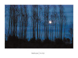 Moonlight Prints by David Luczyn