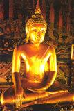 Buda Pôsteres