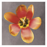 Sunshine Tulip Prints by Erin Clark