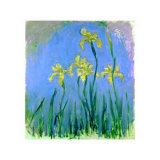 Les Iris Jaunes Poster by Claude Monet