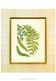 Fern with Crackle Mat II Prints by Samuel Curtis