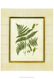 Fern with Crackle Mat IV Prints by Samuel Curtis