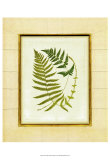 Fern with Crackle Mat III Print by Samuel Curtis