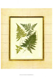 Fern with Crackle Mat I Poster by Samuel Curtis