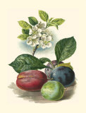 Plum Blossom Prints