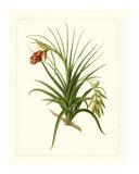 Exotic Flora III Giclee Print
