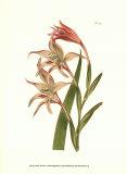Curtis-BlumenI Poster von Samuel Curtis