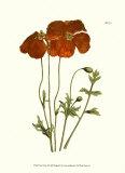Samuel Curtis - Fiery Florals II - Art Print
