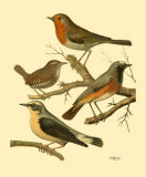 Domestic Bird Family III Print by W. Rutledge